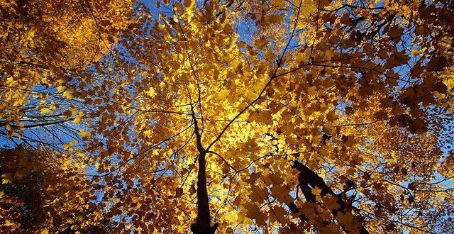 amy-fall-visit-168-copy