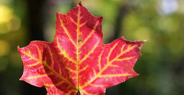 fall-leaves-168-copy